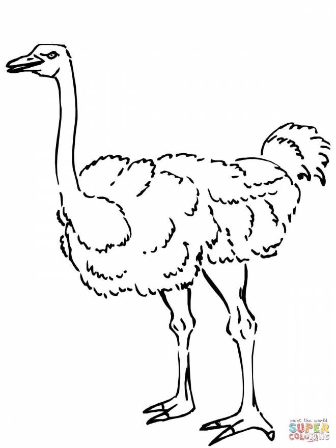 Free coloring and drawings Animal ostrich Coloring page