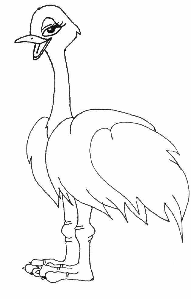 Free coloring and drawings Beautiful ostrich Coloring page