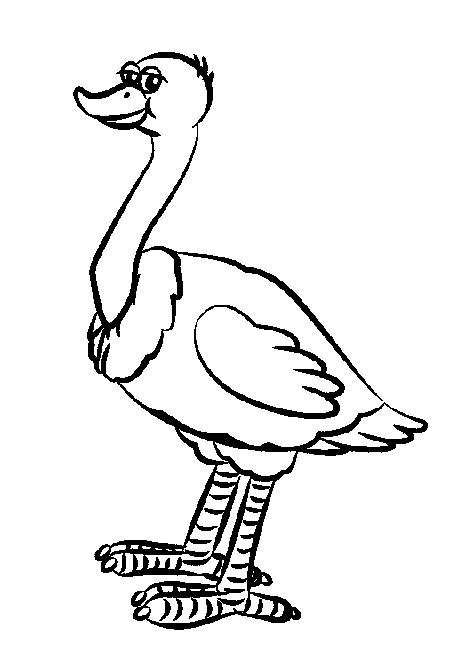 Free coloring and drawings Confident ostrich Coloring page