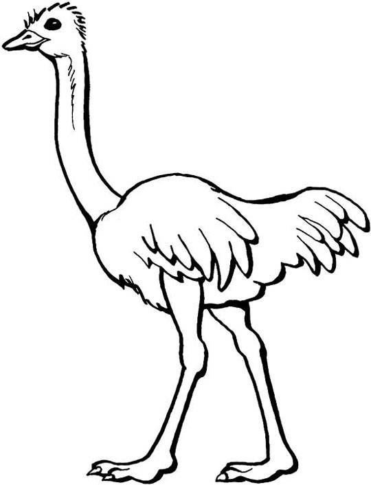 Free coloring and drawings Easy ostrich Coloring page