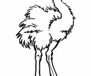 Coloring pages Furious ostrich
