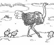 Coloring pages Ostrich and its young