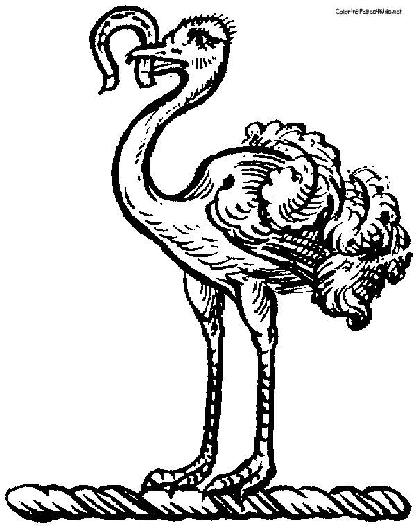 Free coloring and drawings Ostrich and Worm Coloring page