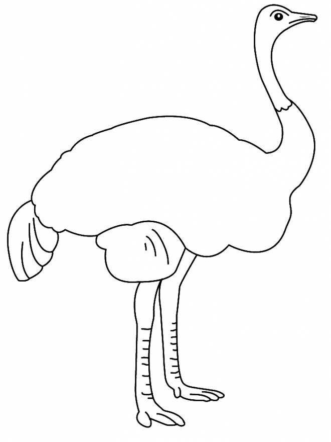 Free coloring and drawings Ostrich in black Coloring page