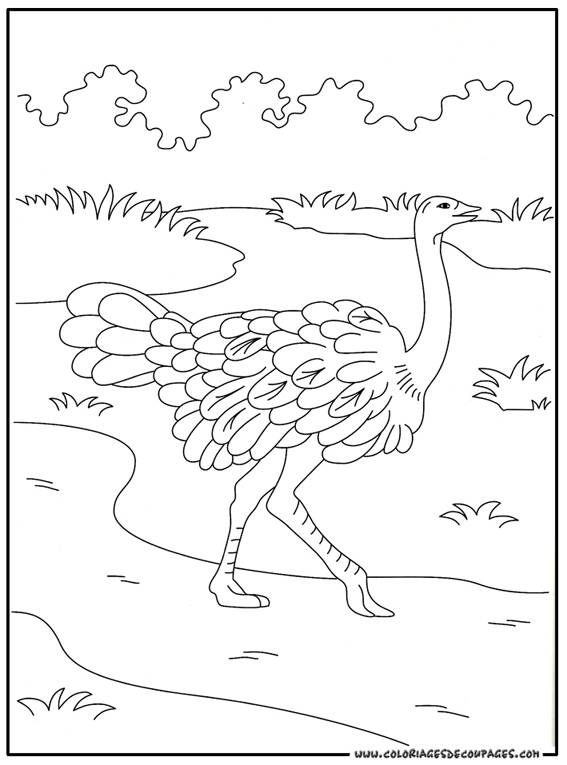 Free coloring and drawings Ostrich in the wild Coloring page