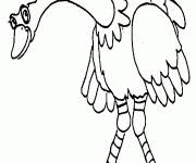 Coloring pages Ostrich looking at you