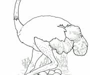 Free coloring and drawings Ostrich to download Coloring page