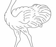 Coloring pages Ostrich with eyes closed
