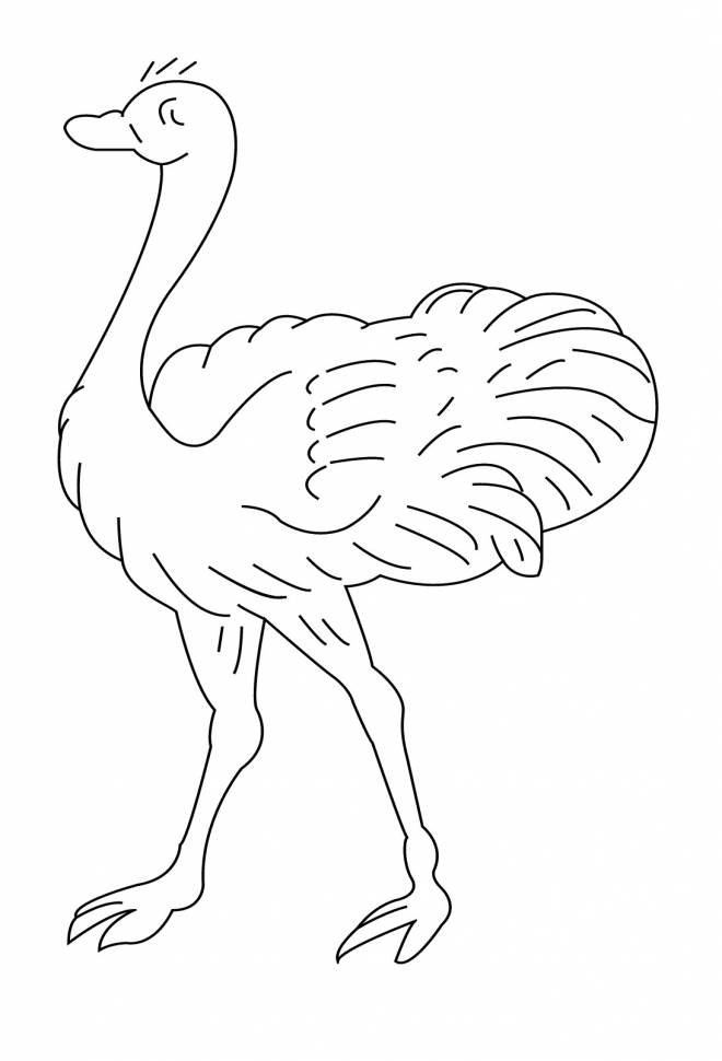 Free coloring and drawings Ostrich with eyes closed Coloring page