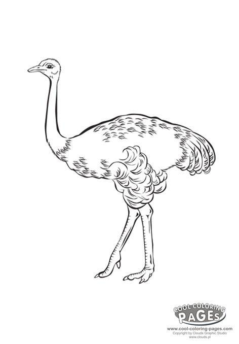 Free coloring and drawings Painting ostrich Coloring page