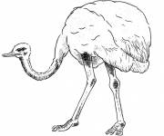 Coloring pages Pretty ostrich