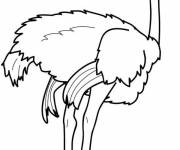 Free coloring and drawings Standing ostrich Coloring page