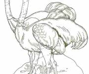Free coloring and drawings Two Ostriches Coloring page