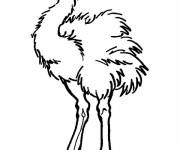 Coloring pages Uneasy ostrich