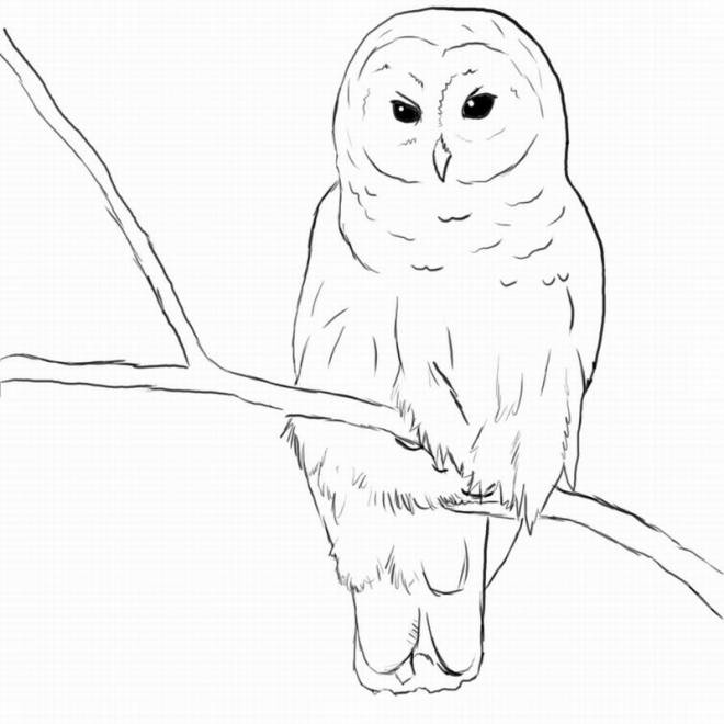 Free coloring and drawings A black and white owl Coloring page