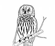 Coloring pages An Owl is resting