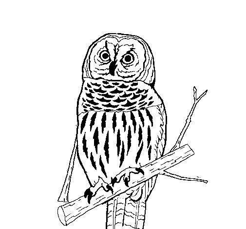 Free coloring and drawings An Owl is resting Coloring page
