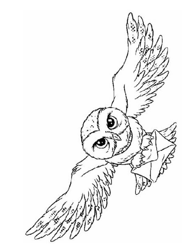 Free coloring and drawings Factor owl Coloring page