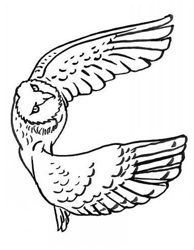 Free coloring and drawings Flying owl Coloring page