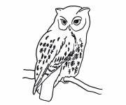 Coloring pages Isolated owl