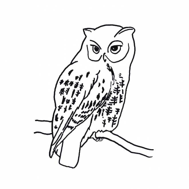 Free coloring and drawings Isolated owl Coloring page