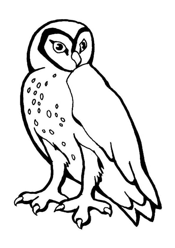 Free coloring and drawings Maternal owl Coloring page