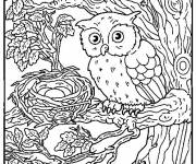 Coloring pages Owl and its Eggs