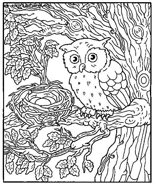 Free coloring and drawings Owl and its Eggs Coloring page