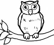 Free coloring and drawings Owl for child Coloring page