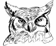 Coloring pages Owl head