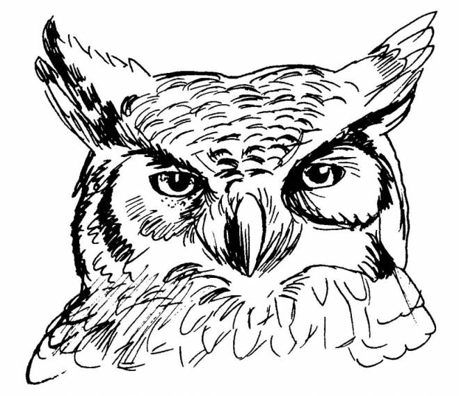 Free coloring and drawings Owl head Coloring page