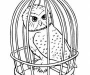 Coloring pages Owl in his cage