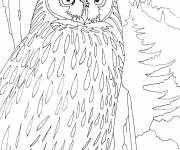 Coloring pages Owl in the forest
