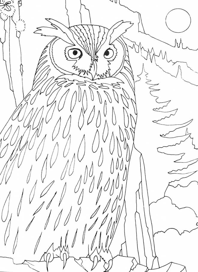 Free coloring and drawings Owl in the forest Coloring page