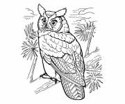 Free coloring and drawings Owl in the wild Coloring page