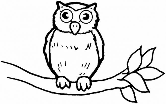 Free coloring and drawings Owl is watching you Coloring page