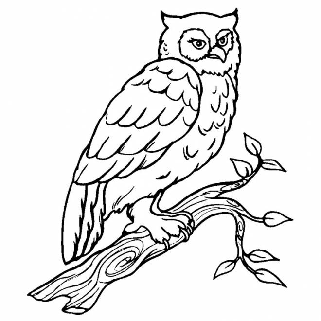Free coloring and drawings Owl on the branches Coloring page