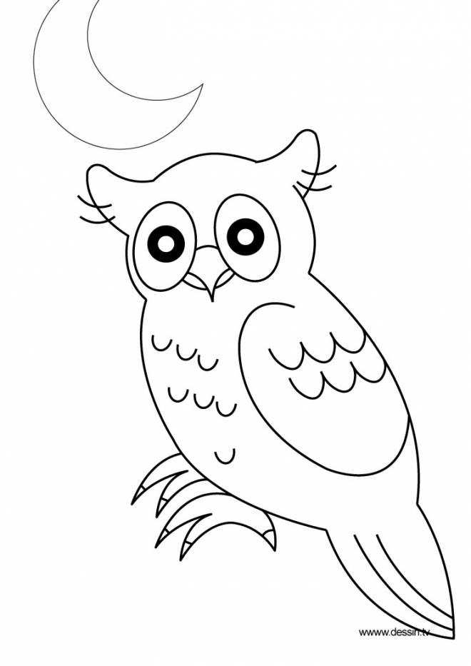 Free coloring and drawings Owl under the moon Coloring page