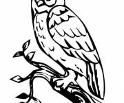 Coloring pages Owl vector background