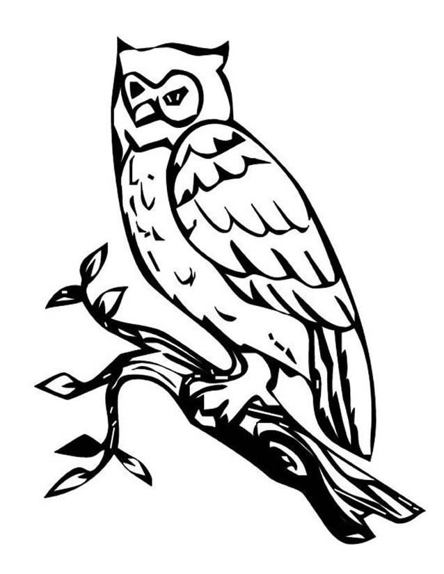 Free coloring and drawings Owl vector background Coloring page