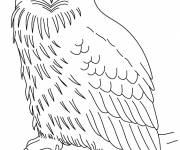 Coloring pages Owl with attentive gaze