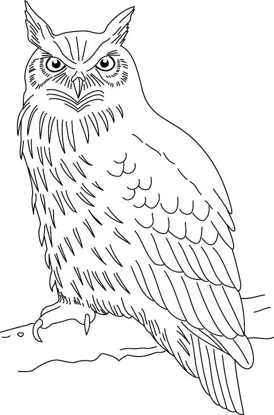 Free coloring and drawings Owl with attentive gaze Coloring page