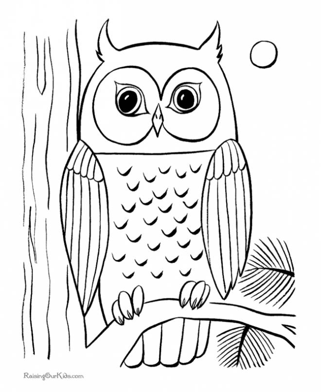 Free coloring and drawings Owl with big eyes Coloring page