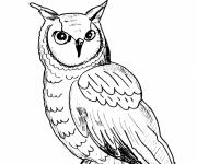 Free coloring and drawings Pencil owl Coloring page