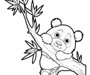 Coloring pages Baby panda on the tree