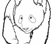 Coloring pages Easy giant panda
