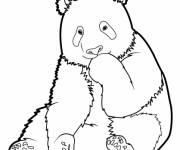 Coloring pages Panda for child