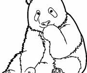 Coloring pages Shy panda