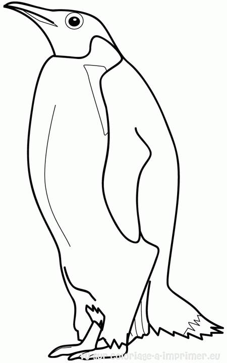 Free coloring and drawings Penguin online Coloring page