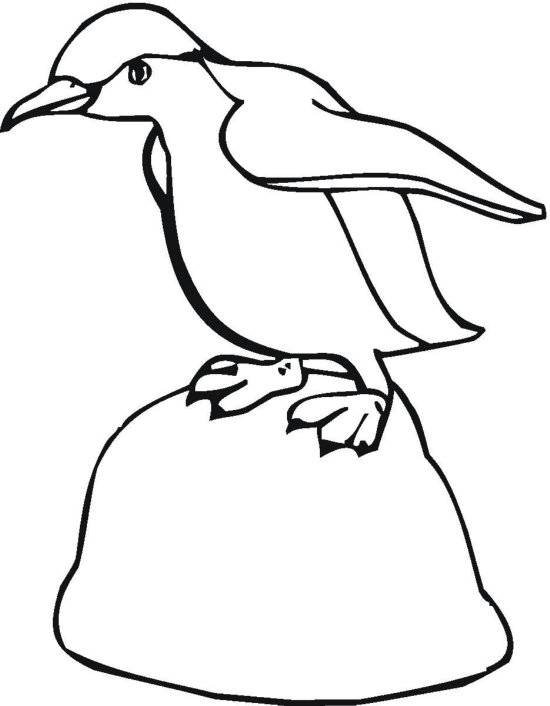 Free coloring and drawings Penguin walking Coloring page